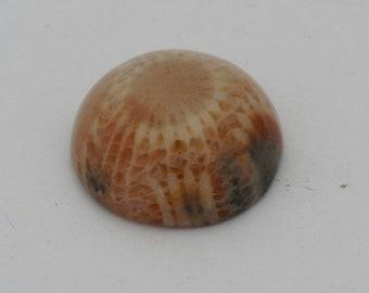 Petowski Coral fossil cabochon from sumatra