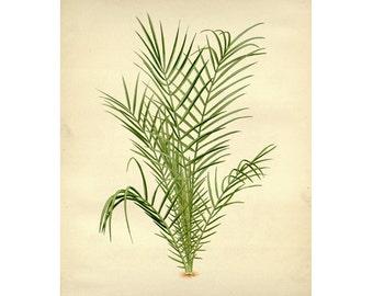 Vintage Botanical Floral Leaf/Greens Series Plate 3 Digital Download: 8x10, specimens, vntage-look, printing and framing, decoupage