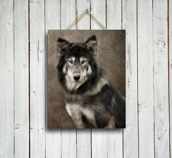 Wolf - Portrait of a Wolf - 11x 14 print - Wolf dog wall decor - wolf photo -wolf decor- Native American style decor - wolf photograph