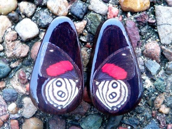 "1 3/8"" Real Butterfly Wing Teardrop Plugs - Callicore"
