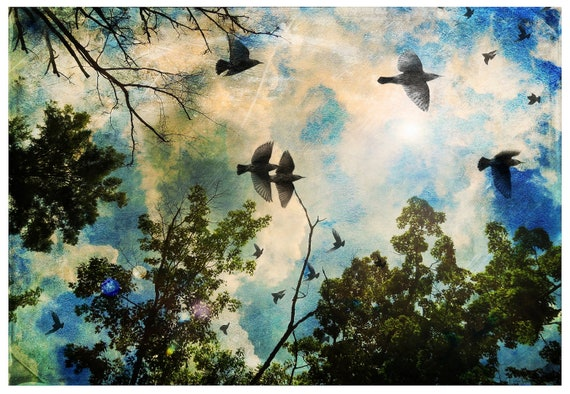 Birds filled the sky, bird and tree art, fine art photography, surreal,dream like, clouds,blue sky, sunshine,blackbirds,tree branches,poster