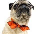 California Tangerine Martini Bowtie Collar