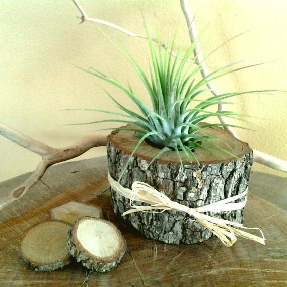 Air plant in natural tree trunk slice rustic wedding for Tree trunk slice ideas