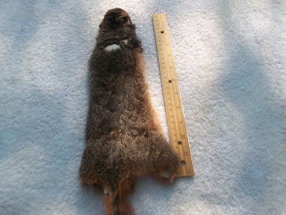 real animal tanned squirrel skin hide pelt fur part
