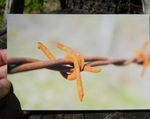 Rusted-Rusty- Barbed Wire-Photography-Upclose-Macro- 4x6 Glossy Print