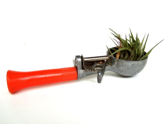 Vintage Ice Cream Scoop with Neglecta Air Plant YUMMY