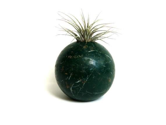 Repurposed Green Croquet Ball with Air Plant