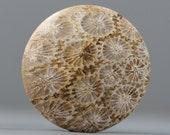 Grey Brown Fossil Coral Round Gemstone Organic Cabochon - 31mm (C994)