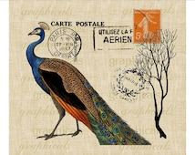 Peacock Carte Postale Orange French decor Instant Digital download Graphic image transfer for Iron on fabric burlap decoupage pillow No 1714