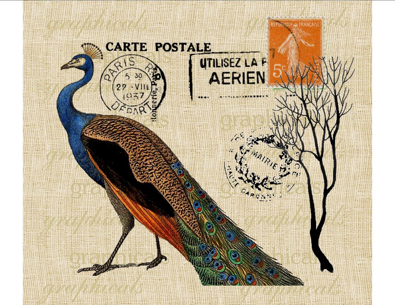 peacock carte postale orange french decor instant digital. Black Bedroom Furniture Sets. Home Design Ideas