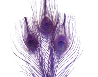 10 Purple Peacock Tail Feathers Cruelty Free Craft Supplies
