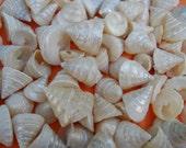 among pong seashells BEACH NAUTICAL DECOR crafts weddings