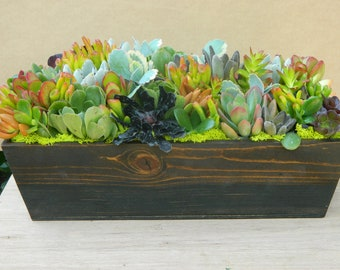 Succulent  Centerpiece, Succulent Fall Centerpiece, Succulent Thanksgiving Tabletop - Succulent Fall  Wedding Table Decor Fall Centerpiece