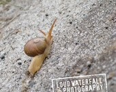 Relaxing Afternoon In Africa, International Travel, Ethiopia, Snail's Pace 4x6 Nature Photograph