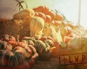 Late Fall Harvest, Gourds and Squash on Haystacks, Still Life 8x12 Fine Art Photograph