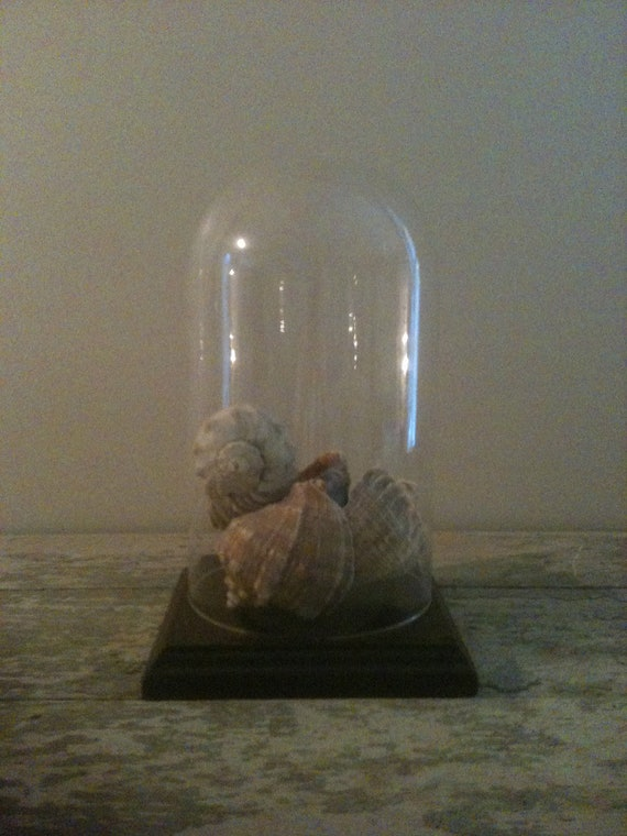 Vintage Glass Dome and Base with Old Seashells