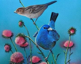 Bird Print, Indigo Bunting Bird on Thistle, Wildlife, Art and Collectibles, 11 x 14, Bluebirds, Songbirds, Wall Art, Home Decor, Wall Decor