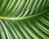 Leaf  Macro Photograph