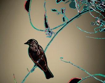 MIDNIGHT SONGBIRD, Art Photography, Home Decor, Tree, Bird, Nature, Neon Turquoise, Lime Green, Peach, artBJC