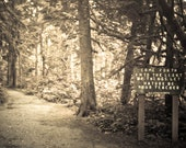 Poetry, Path to the Forest, Sepia, Light, Forest- 8 x 10 Fine Art Photography Print