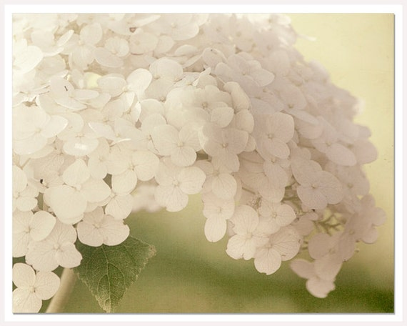Rustic White Flower Photograph, White Botanical Art Print, Cream Shabby Chic, 8x10 print, Spring Summer Floral, White guest room art photo
