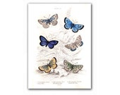 Amazing Butterflies, vintage illustration printed on Parchment paper, Nursery Room decor, Educational plate. Buy 3 and get 1 FREE