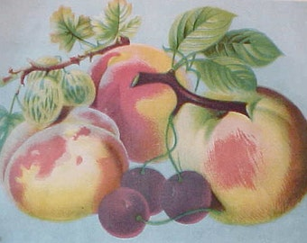 Charming 1800's Victorian Lithograph Scrap of Autumn Fruits