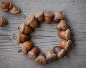 Acorn acorns Fall Decorations, Real acorns, Natural acorns Winter Wedding, Thanksgiving, Christmas Decoration,  Wedding