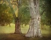 "Tree photograph - Fine art photo dreamy landscape - Tree rustic home decor - Vintage inspired - Antique look -  8x10 ""Romantic"""