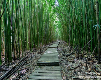 Steps Leading Through Thick Bamboo Forest on Maui in Hawaii