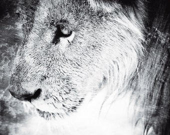 Lion Photography - Wildlife Black and White Wall Art  - Contemporary Animal Photo - Monochrome Home Decor Print