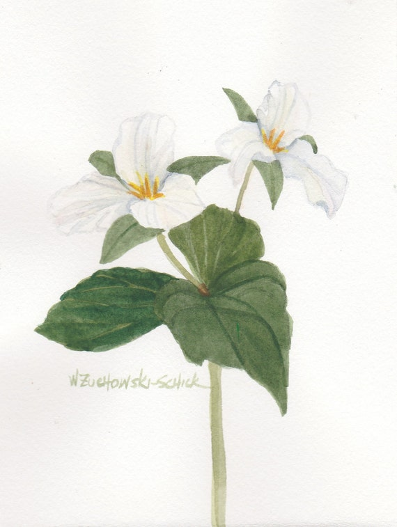 White Trillium Double Bloom Original Watercolor