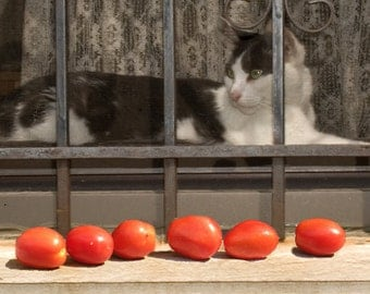 Black and white cat with tomatoes