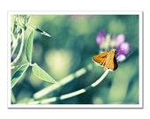 Flower Fine Art Photography, Green mint orange and purple, Butterfly Moth on Pink flower, Canvas or Photo Paper Fine Art Macro Closeup 5x7