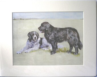 NEWFIE DOG PRINT Mounted Beautiful Newfoundland Newfie dog print with Landseer dog Unique Christmas Thanksgiving Birthday Anniversary gift