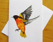 baltimore oriole art card