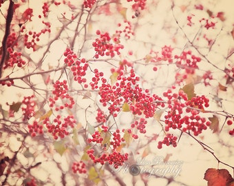 Red Winter Berries, Red Berries Photograph, Winter Berries, Winterberry, Red, Winter
