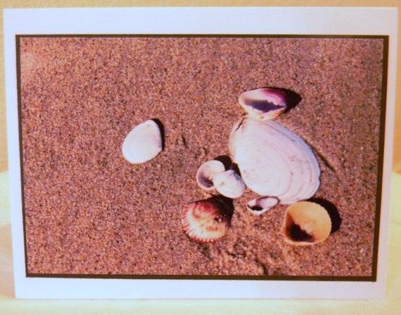 photo card, seashells, beach, sand, California, shore