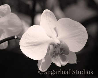 Black and White Orchid 2 -- Fine Art Floral Photography Print -- Photo, Home Decor, Flowers, Art