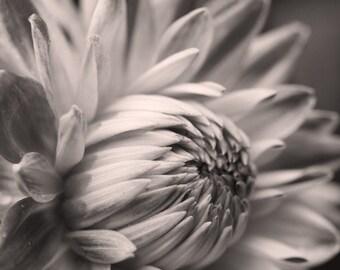 Black and White Dahlia 7 -- Fine Art Floral Photography Print -- Photo, Home Decor, Flowers, Art