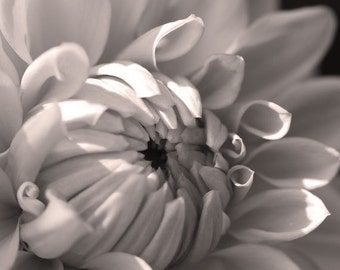 Black and White Dahlia 8 -- Fine Art Floral Photography Print -- Photo, Home Decor, Flowers, Art