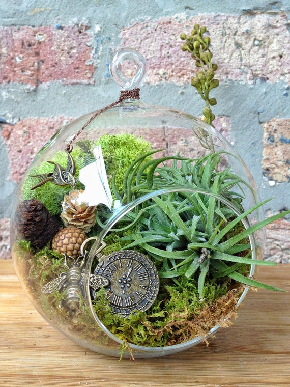Steampunk Air Plant Terrarium A Perfect Birthday Or Mothers
