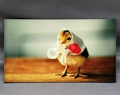 Chick Wearing A Kerchief Hat Rectangle Photo Magnet Baby Animals