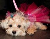 Pretty Princess Pup Dog Feather and Crystal Hair Clip