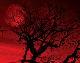 Tree photo Red sky Digital Download Red Moon Bare Branches Night sky fantasy full moon dreamy surreal wall art halloween red decor