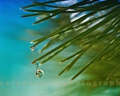 Fine Art Photo,Macro Rain Drops With Blue Sky falling off of Pine Needles in the Sun