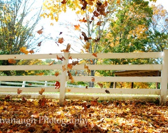 Falling Leaves Photograph