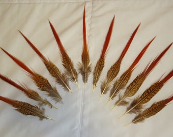 Golden Pheasant Red Tipped Feathers Wholesale lot Bulk