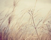 Against the grain - neutral fine art photograph - - runpoppyrun