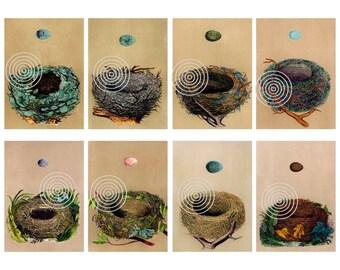Bird Nest Collage Download - Vintage Bird Nests Digital Download - Vintage Bird Nest Tags For Scrapbooks, Gift Tags, Cards etc.